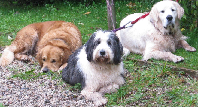 Three dogs waiting for their owners