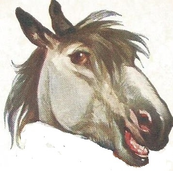 Horse's Head from old children's card game