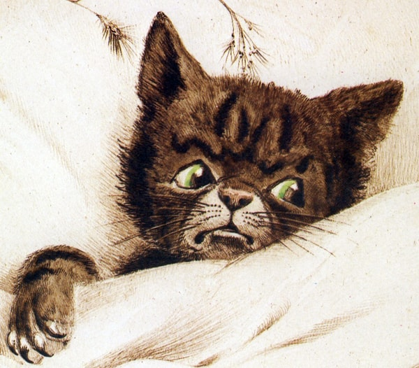Humanised cat in bed