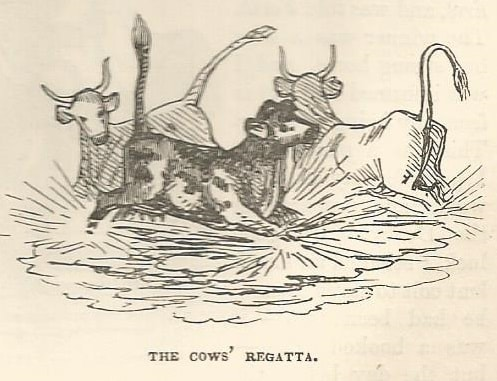 Cows splashing in water. Woodcut by Thomas Hood.