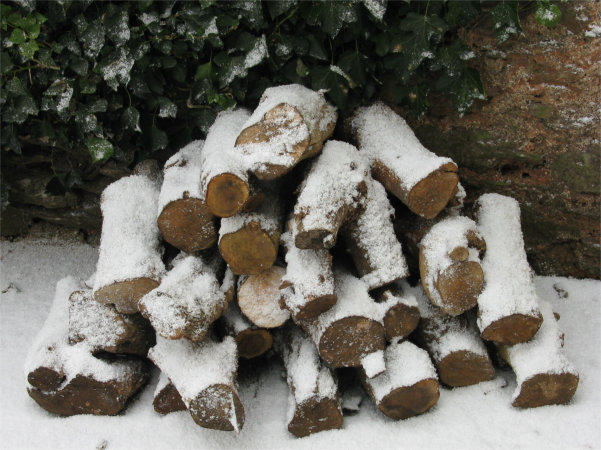 A pile of logs dusted with snow, with an evergreen hedge behind.