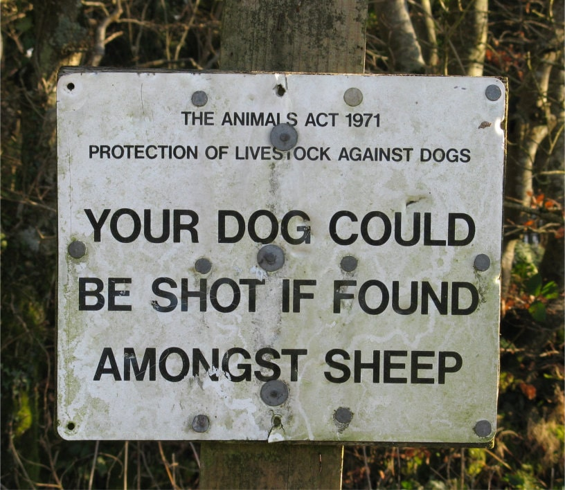 Notice: Your dog could be shot if found amongst sheep